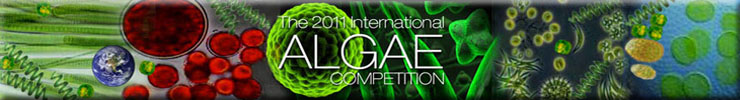 AlgaeCompetition10